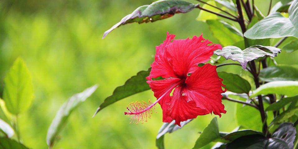 flower-1210305__480