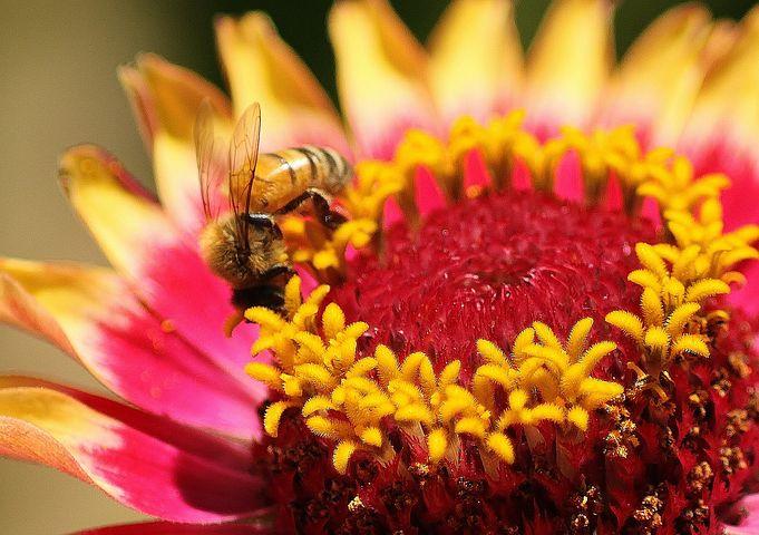 flower-1442415__480