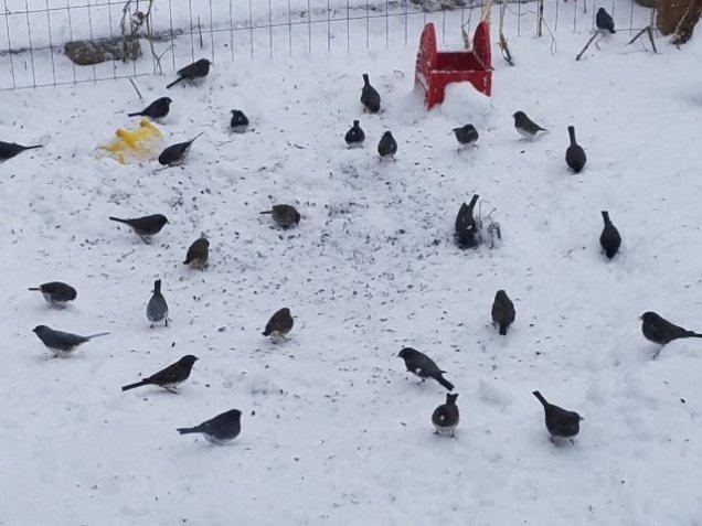 snows4